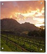 Wineland Sunrise Acrylic Print by Aaron S Bedell