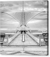 Wing Span Acrylic Print by Scott Norris