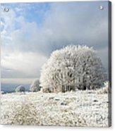 Winter Acrylic Print by Anne Gilbert