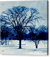 Winter Blues Acrylic Print by Shawna Rowe