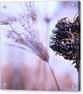 Winter Flowers  Acrylic Print by Bob Orsillo