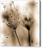 Winter Flowers II Acrylic Print by Bob Orsillo