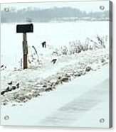 Winter Foragers Acrylic Print by Julie Dant