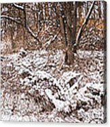 Winter Forest Panorama Acrylic Print by Elena Elisseeva