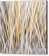 Winter Grass Abstract Acrylic Print by Elena Elisseeva