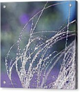 Winter Grass Acrylic Print by Artist and Photographer Laura Wrede