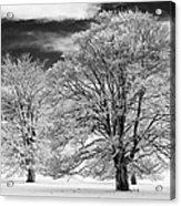 Winter Horse Chestnut Trees Monochrome Acrylic Print by Tim Gainey