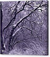 Winter In Purple Acrylic Print by Carol Groenen