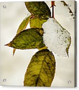 Winter Leaves And Snow Acrylic Print by Julie Palencia