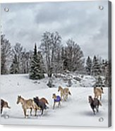 Winter Run Acrylic Print by Peter Lindsay