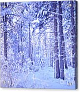 Winter Solace Acrylic Print by Tara Turner