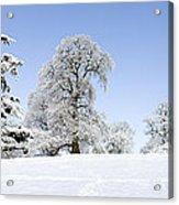 Winter Tree Line Acrylic Print by Tim Gainey