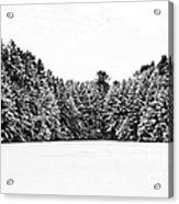 Winter Trees Mink Brook Hanover Nh Acrylic Print by Edward Fielding