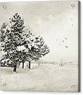 Winter White Acrylic Print by Julie Palencia