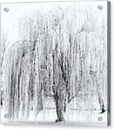 Winter Willow Acrylic Print by Mike  Dawson