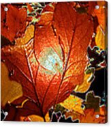 winters autumn in Pasadena Acrylic Print by Kenneth James