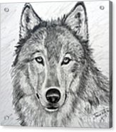 Wolf Acrylic Print by Julie Brugh Riffey