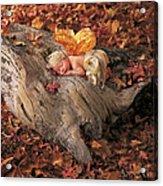 Woodland Fairy Acrylic Print by Anne Geddes