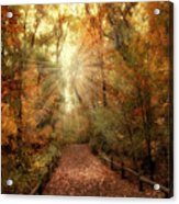 Woodland Light Acrylic Print by Jessica Jenney