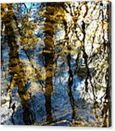 Woodland Reflections Acrylic Print by Shawna  Rowe