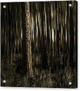 Woods Acrylic Print by Mario Celzner