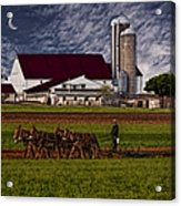 Working The Fields Acrylic Print by Susan Candelario