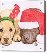 Xmas Pups Acrylic Print by Deborah Nicholas