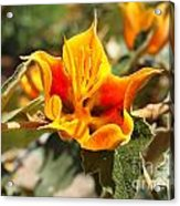 Yellow Flower Acrylic Print by Gregory Dyer