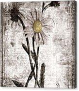 Yesterday's Garden II Acrylic Print by Bonnie Bruno