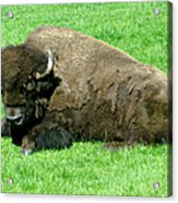 You Tell Him He Needs To Lose Weight Acrylic Print by Jeff Swan