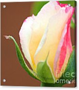 You've Touched My Heart Acrylic Print by  The Art Of Marilyn Ridoutt-Greene