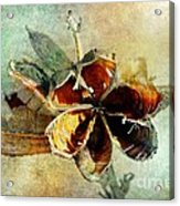 Yucca Pod - Barbara Chichester Acrylic Print by Barbara Chichester