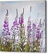 Yukon State Flower Acrylic Print by Priska Wettstein