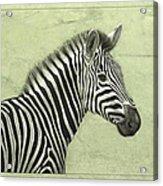 Zebra Acrylic Print by James W Johnson