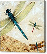 Zen Flight - Dragonfly Art By Sharon Cummings Acrylic Print by Sharon Cummings