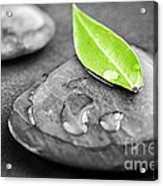 Zen Stones Acrylic Print by Elena Elisseeva