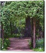 Zilker Botanical Tree Arbor Acrylic Print by Kristina Deane