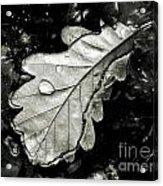 Leaf Acrylic Print by Odon Czintos