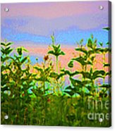 Meadow Magic Acrylic Print by First Star Art