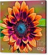 Orange Flowers In Their Buttonholes Acrylic Print by Gwyn Newcombe