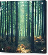 The Green Ray Acrylic Print by Paul Grand
