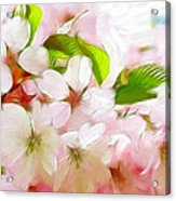 A Day In Spring Acrylic Print by Steve K
