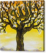 Allah's Name In A Tree Acrylic Print by Felicity LeFevre