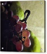 Back Lit Grape Still Life Acrylic Print by Andrew Soundarajan