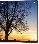 Bare Tree At Sunset Acrylic Print by Skip Nall