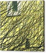 Branch Office Acrylic Print by Joe Jake Pratt