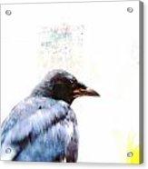Crow Portrait Acrylic Print by YoMamaBird Rhonda