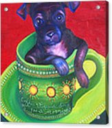 Dog In Cup Acrylic Print by Gail Mcfarland