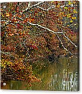 Fall Along West Fork River Acrylic Print by Thomas R Fletcher
