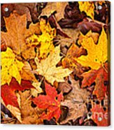 Fall Leaves Background Acrylic Print by Elena Elisseeva